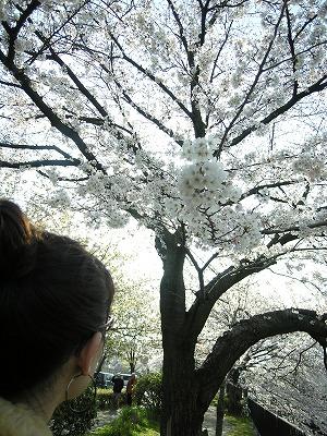 お花見in京都